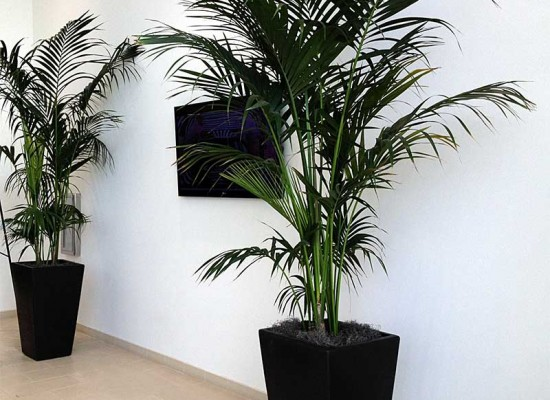 Interior plantscaping in commercial lobby