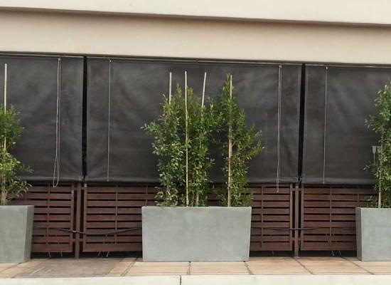 Plantscaping outside restaurant