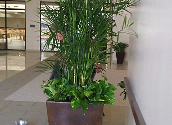 Commercial plantscaping
