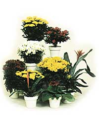 Most flowering plants are high light level plants