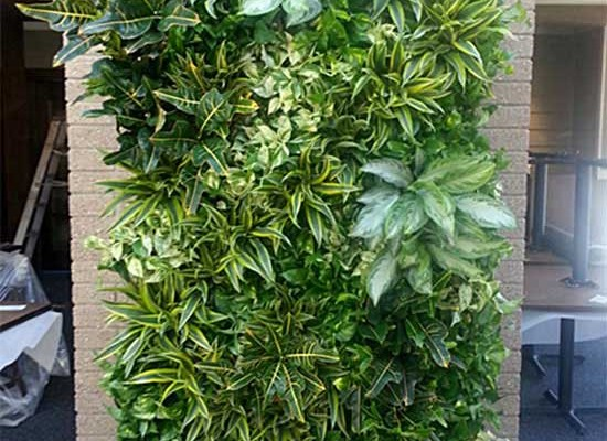 Living wall outside
