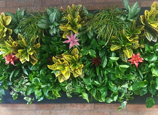 Indoor living wall