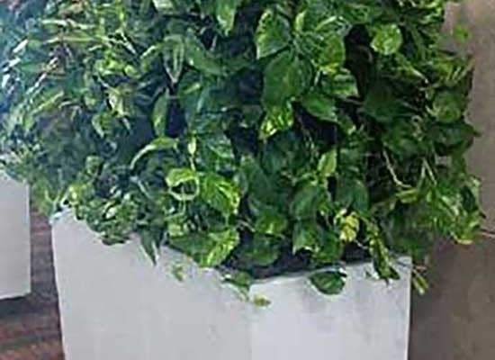 Living wall hedge