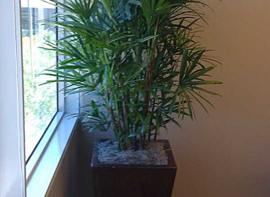 Office lobby plantscaping