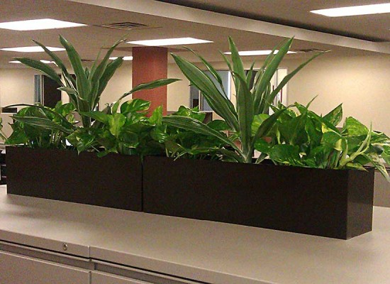 Planter on top of office filing cabinet