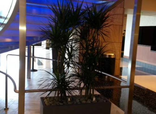 Palms in commercial lobby