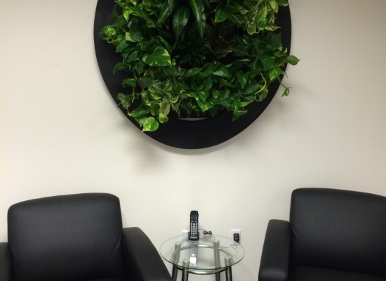 Oval Living Wall